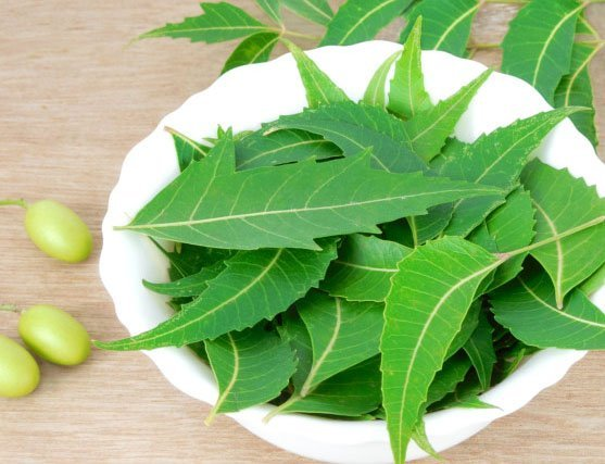 Neem is a natural contraception method